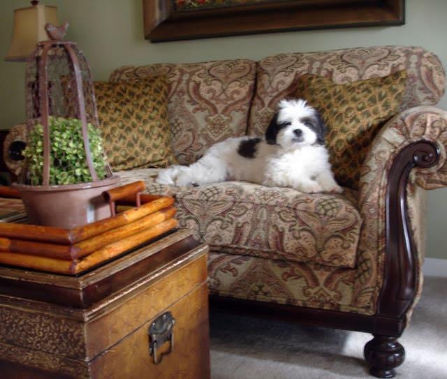 WorthingCourt.blogspot.com: Lhasapoo