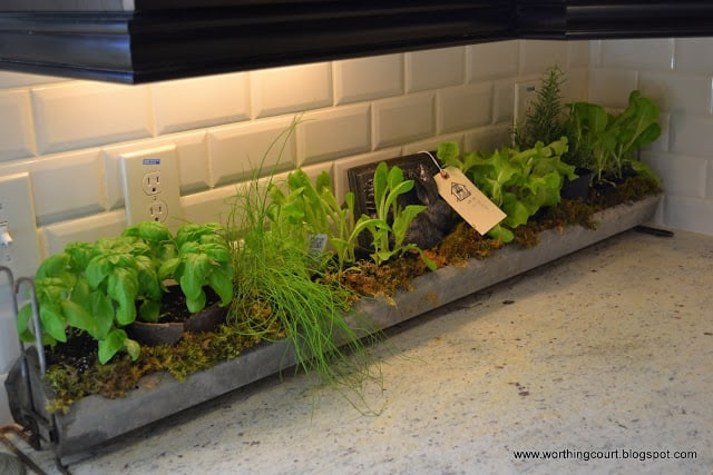 fresh herbs in metal container with moss in a kitchen via Worthing Court blog