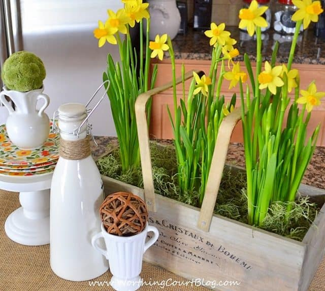 White cups and a white container for salad dressing is beside the daffodils.