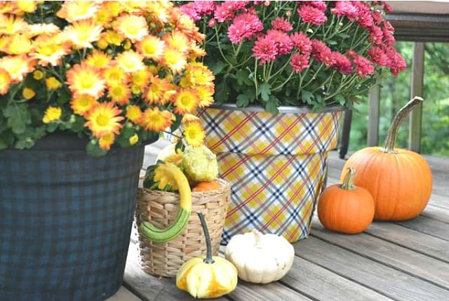 Cover inexpensive clay pots with plaid fabric for a great way to display mums during the fall