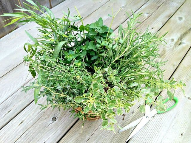 How to dry and freeze fresh herbs to preserve them for the winter months