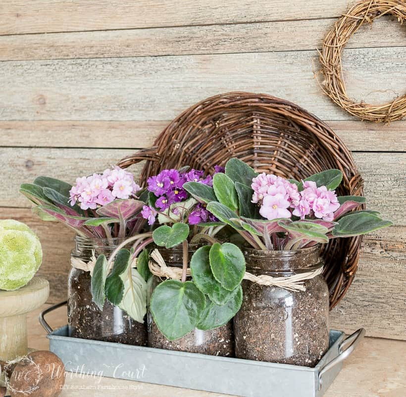 A pretty vignette of mason jars filled with purple and pink violets.