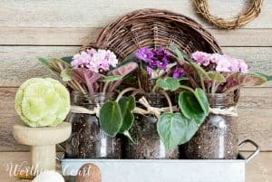 mason jars planted with purple and pink violets