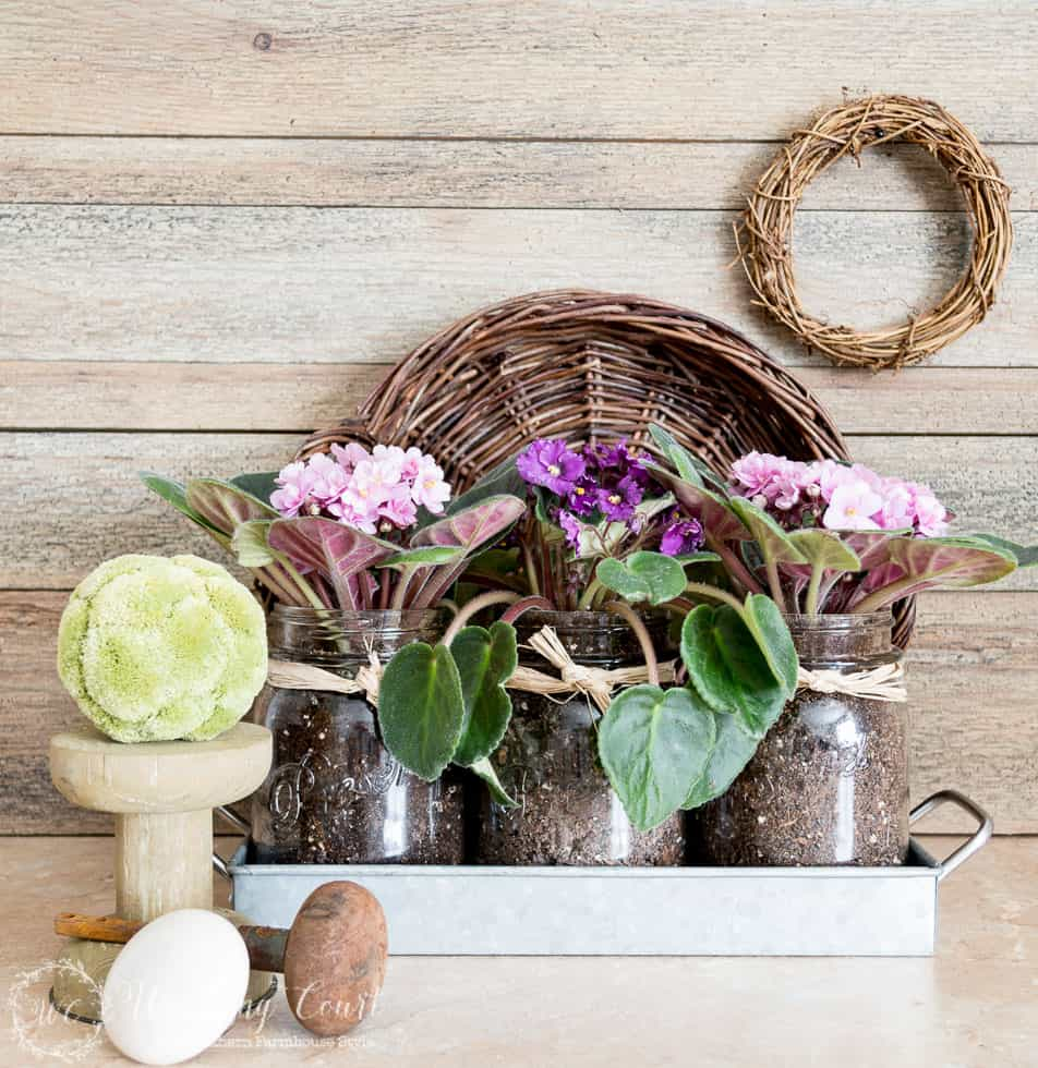 An easy gift for any occasion - African violets in mason jars || Worthing Court