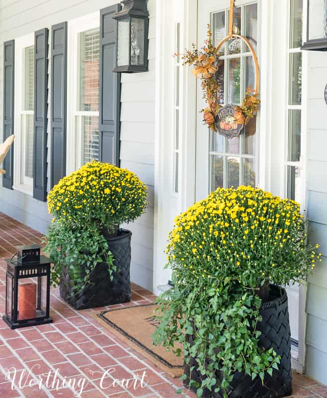 Fall mums and English ivy in baskets #FallDecor #PorchDecor #Mums || Worthing Court