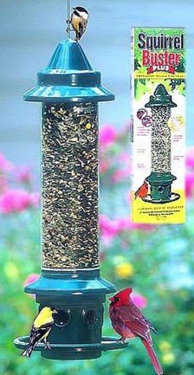 A squirrel proof bird feeder that actually keeps the squirrels out! #birdfeeder #squierrelproof #birds #birdfeeding #birdwatching