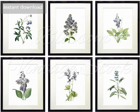 set of six blue floral botanical prints