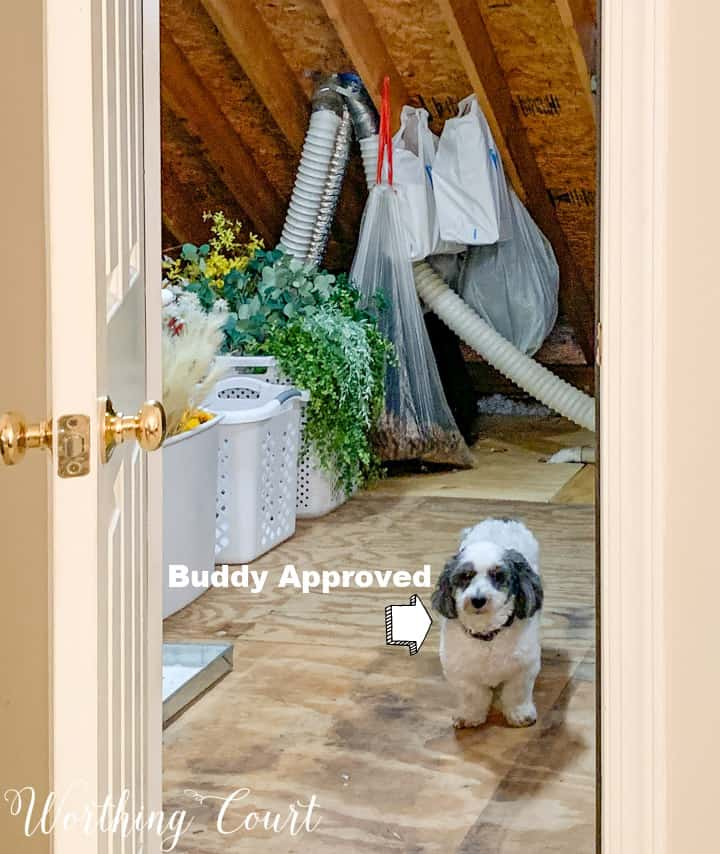 black and white dog standing at entrance to walk in attic